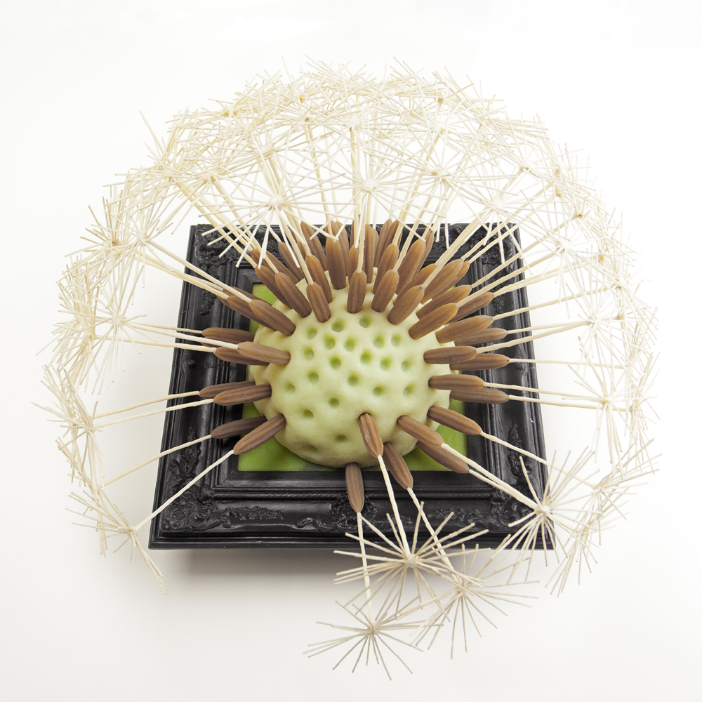 Dandelion Clock 2012
