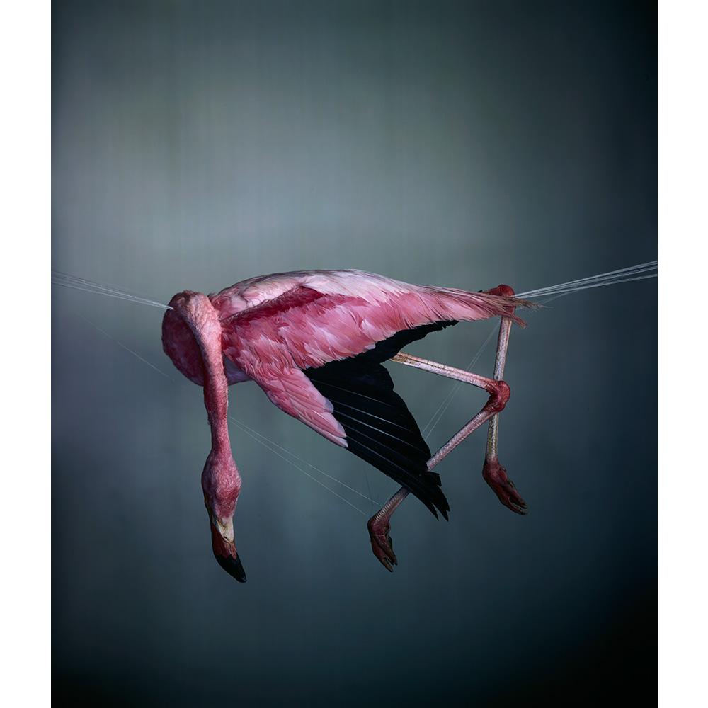 Flamingo I 2012