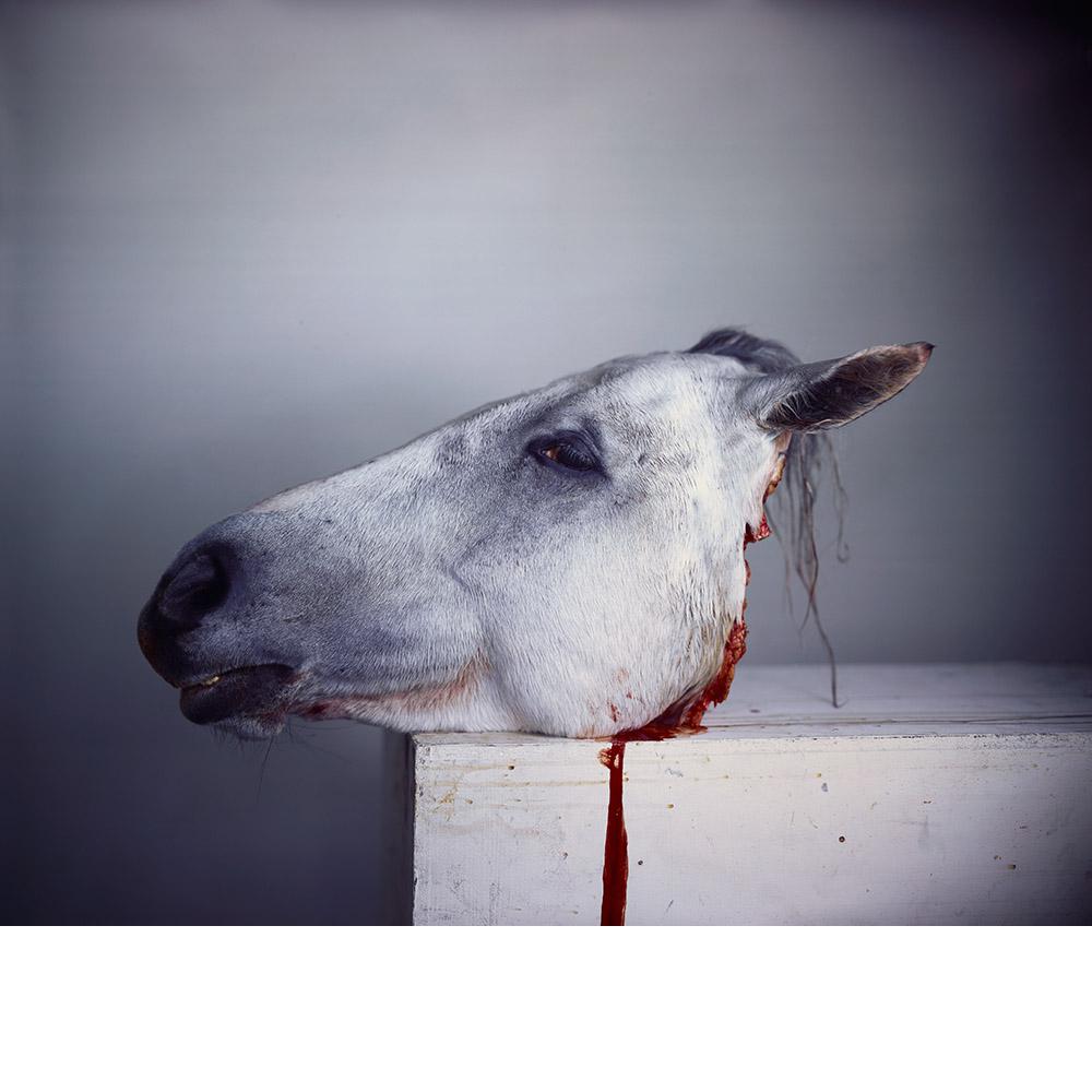 Horse Head 2012