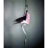Flamingo II, 2012