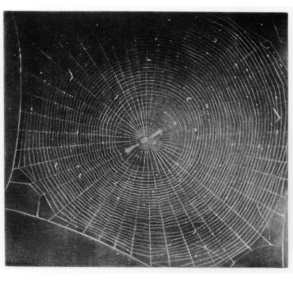 Web #2: Mezzotint 2000