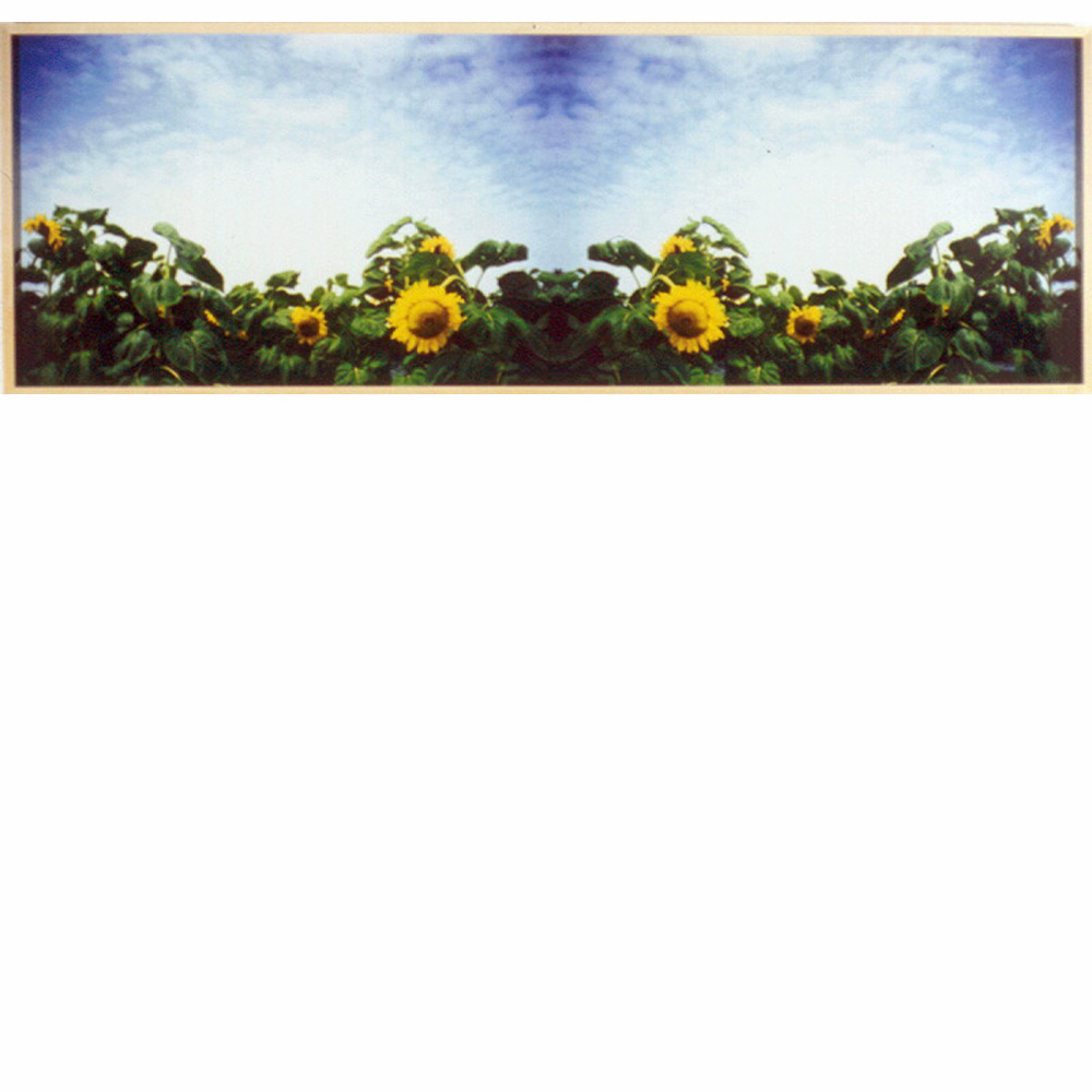 Sunflowers 2000