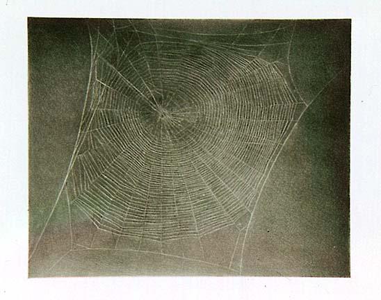 Untitled (Web 4) 2002
