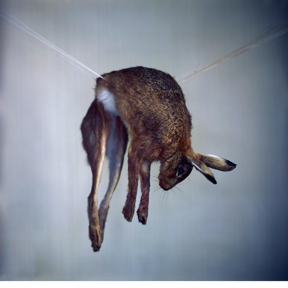 Hare II, 2012