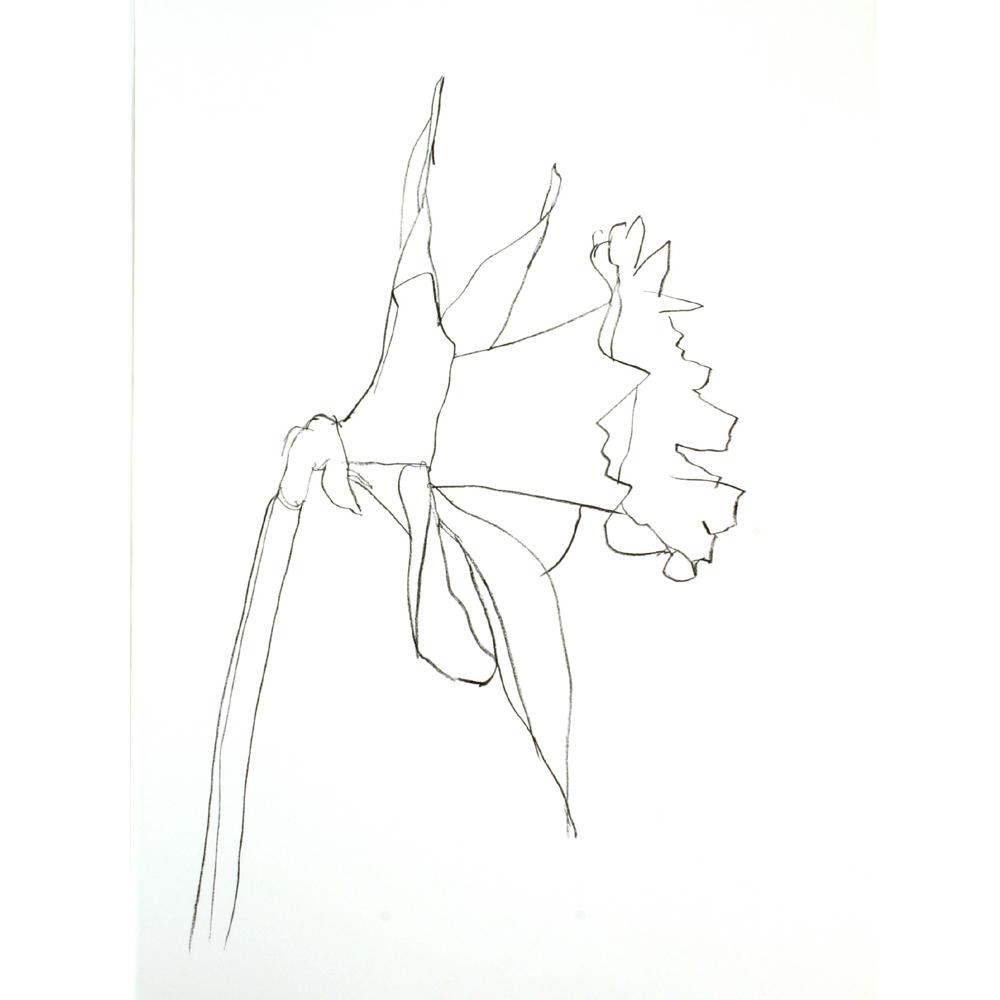 Daffodil 2004